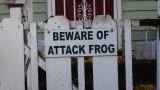Beware of Attack Frog