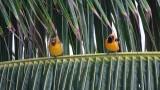 Akumal Birds