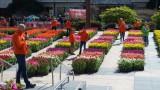 American Tulip Day Union Square