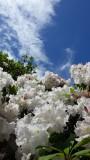 Portland Crystal Springs Rhododendron Garden