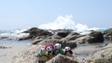 The Pandafords at Hacienda Encantada Beach