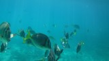 Santa Maria Beach Snorkeling