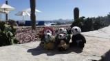 The Pandafords hanging out at the Hacienda Encantada pool