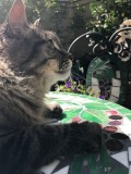 Rocky on his Garden Table