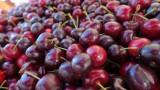 Civic Center Farmers Market Cherries