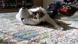 Muni the Kitty
