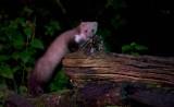 Zoogdieren/Mammals