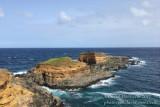 Mixed Roseate and Common Tern breeding site_Ponta das Contendas, Terceira Is., Azores