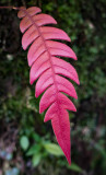 Papua Plants