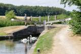 Swans_at_Browns_Lock_No.32.jpg