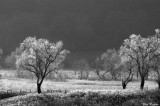 Trees on a Frosty Morning