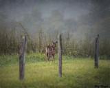 Along a Fenced Field