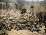 Africa's Cleanup Crew