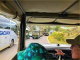 Safari Traffic