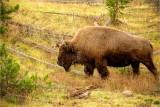 Jackson Hole and Yellowstone National Parks