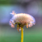flower_series