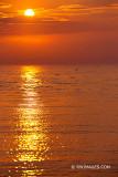 CAOE COD SUNSET