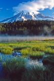 Grasses at Reflection Lake, Mt. Rainier National Park, WA