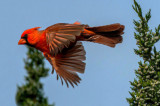 Birds of the Verde Valley, Mingus Mountain, and Prescott Valley, AZ