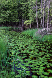 Swale with Lily Pads, Ridges  Sanctuary, Door, County, WI