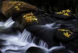 Fallen Sycamore leaves along wet Beaver Creek, Wet Beaver Creek Wilderness, AZ