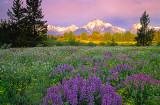 Pilgrim Creek Meadow, Grand Teton National Park, WY