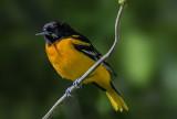 Lake Erie Birdng Trail, OH