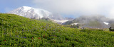 Paradise Meadow, Mt. Rainier National Park, WA