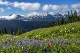 Tatoosh Range from Paradise Meadow, Mt. Rainier National Park, WA