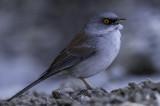 Birds of Southeastern, Arizona