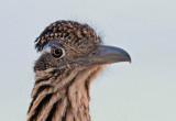 San Diego birds 2017