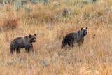 Yellowstone Twins