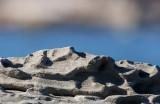 stonescape 337