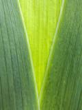 spring green 606