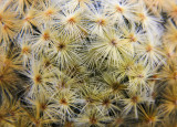 prickly situation 045