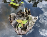 island in the stream 049