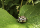 at a snail's place 949