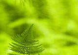 green on green 804