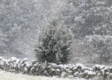 first snow 567