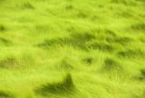basic green
