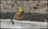 gallery_birds