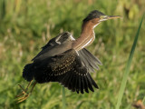 Polk and Osceola County Florida Birds and Butterflies in Flight