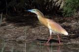 Heron, Egret and Cormorant  Spain