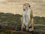 Mammals of Asia