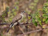 Birds of Western Ghats 2017 / 2018