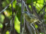 Birds of Brazil 2018