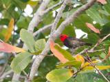 Birds of Lesser Sundas 2017
