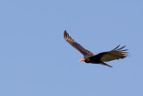 Birds of Bolivia 2013