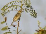 Birds of Mozambique - Zimbabwe 2016