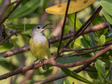 Birds of West Papua 2018